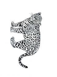 plansa de colorat animale tigri de colorat p18