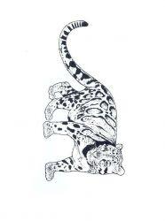 plansa de colorat animale tigri de colorat p19
