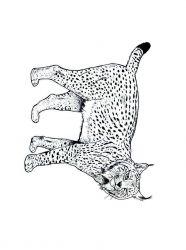 plansa de colorat animale tigri de colorat p21