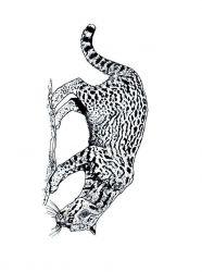 plansa de colorat animale tigri de colorat p23