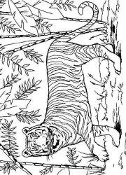 plansa de colorat animale tigri de colorat p31