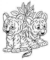 plansa de colorat animale tigri de colorat p33