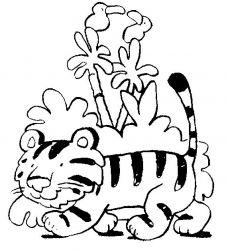 plansa de colorat animale tigri de colorat p35