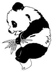 plansa de colorat animale ursi panda de colorat p04