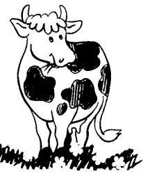 plansa de colorat animale vaci de colorat p25