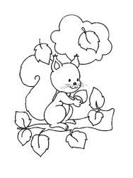 plansa de colorat animale veverite de colorat p05
