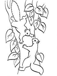 plansa de colorat animale veverite de colorat p14