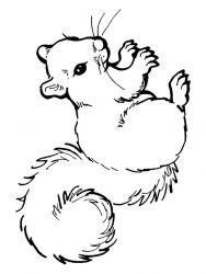 plansa de colorat animale veverite de colorat p20