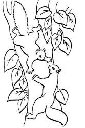 plansa de colorat animale veverite de colorat p33