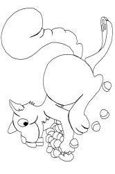 plansa de colorat animale veverite de colorat p34