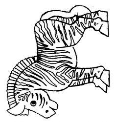 plansa de colorat animale zebre de colorat p05