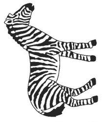plansa de colorat animale zebre de colorat p11