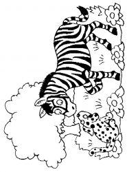 plansa de colorat animale zebre de colorat p12