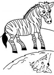 plansa de colorat animale zebre de colorat p14