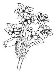 plansa de colorat copaci de colorat p01