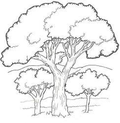 plansa de colorat copaci de colorat p07