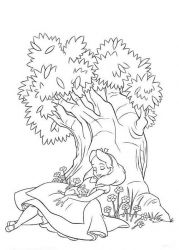 plansa de colorat copaci de colorat p14