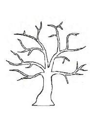 plansa de colorat copaci de colorat p19