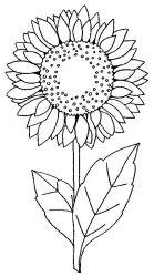 plansa de colorat floarea soarelui de colorat p02