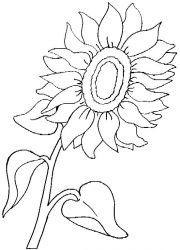 plansa de colorat floarea soarelui de colorat p04