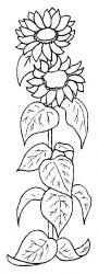 plansa de colorat floarea soarelui de colorat p05