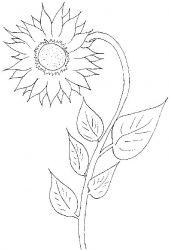 plansa de colorat floarea soarelui de colorat p07