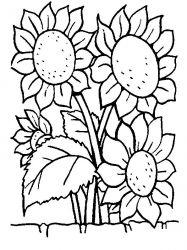 plansa de colorat floarea soarelui de colorat p08