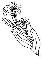 plansa de colorat flori crini de colorat p02