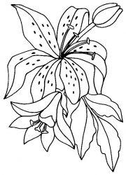 plansa de colorat flori crini de colorat p03