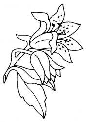 plansa de colorat flori crini de colorat p05
