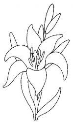 plansa de colorat flori crini de colorat p07