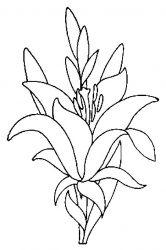 plansa de colorat flori crini de colorat p08