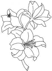 plansa de colorat flori crini de colorat p09