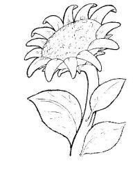plansa de colorat flori de colorat p04