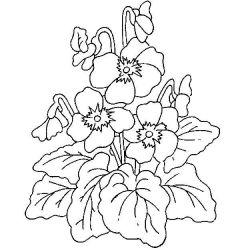 plansa de colorat flori de colorat p05