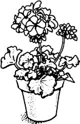 plansa de colorat flori de colorat p100