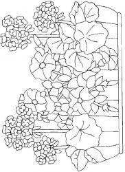 plansa de colorat flori de colorat p101