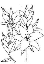 plansa de colorat flori de colorat p12