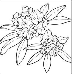 plansa de colorat flori de colorat p66