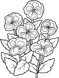 plansa de colorat flori de colorat p71