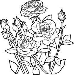 plansa de colorat flori de colorat p76