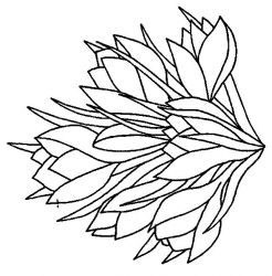 plansa de colorat flori de colorat p91