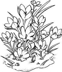 plansa de colorat flori de colorat p95