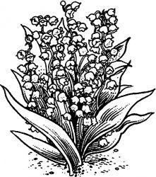 plansa de colorat flori lacramioare de colorat p07