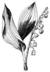 plansa de colorat flori lacramioare de colorat p10