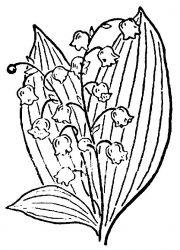 plansa de colorat flori lacramioare de colorat p14