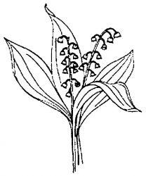 plansa de colorat flori lacramioare de colorat p15