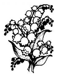 plansa de colorat flori lacramioare de colorat p17