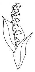 plansa de colorat flori lacramioare de colorat p19