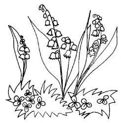 plansa de colorat flori lacramioare de colorat p27